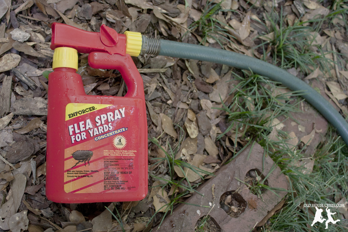 house crazy controlling fleas and mosquitos in the yard diy 01