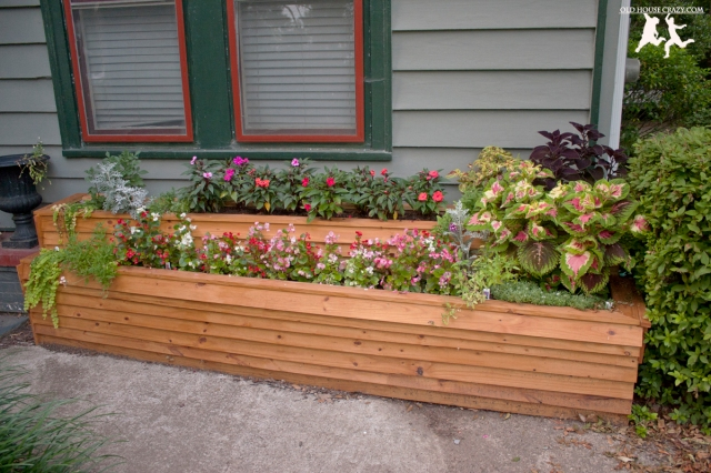 This is the planter after about two months of growth and a coat of cedar stain and sealant.
